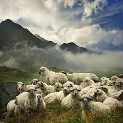 羊たちの沈黙,25.jpg